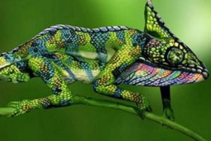 chameleon consumer