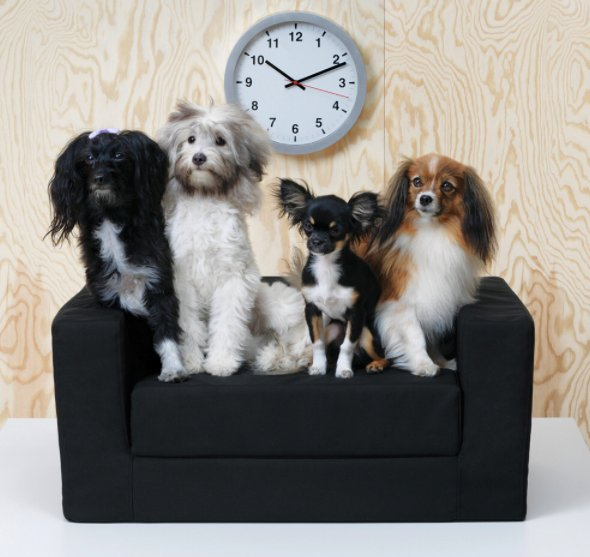 Ikea furniture for dogs
